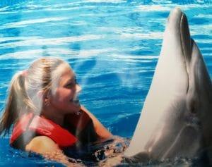 Izlet plivanje sa delfinima